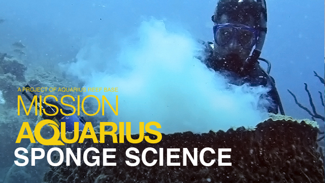 MissionAquarius_SpongeScience.jpg