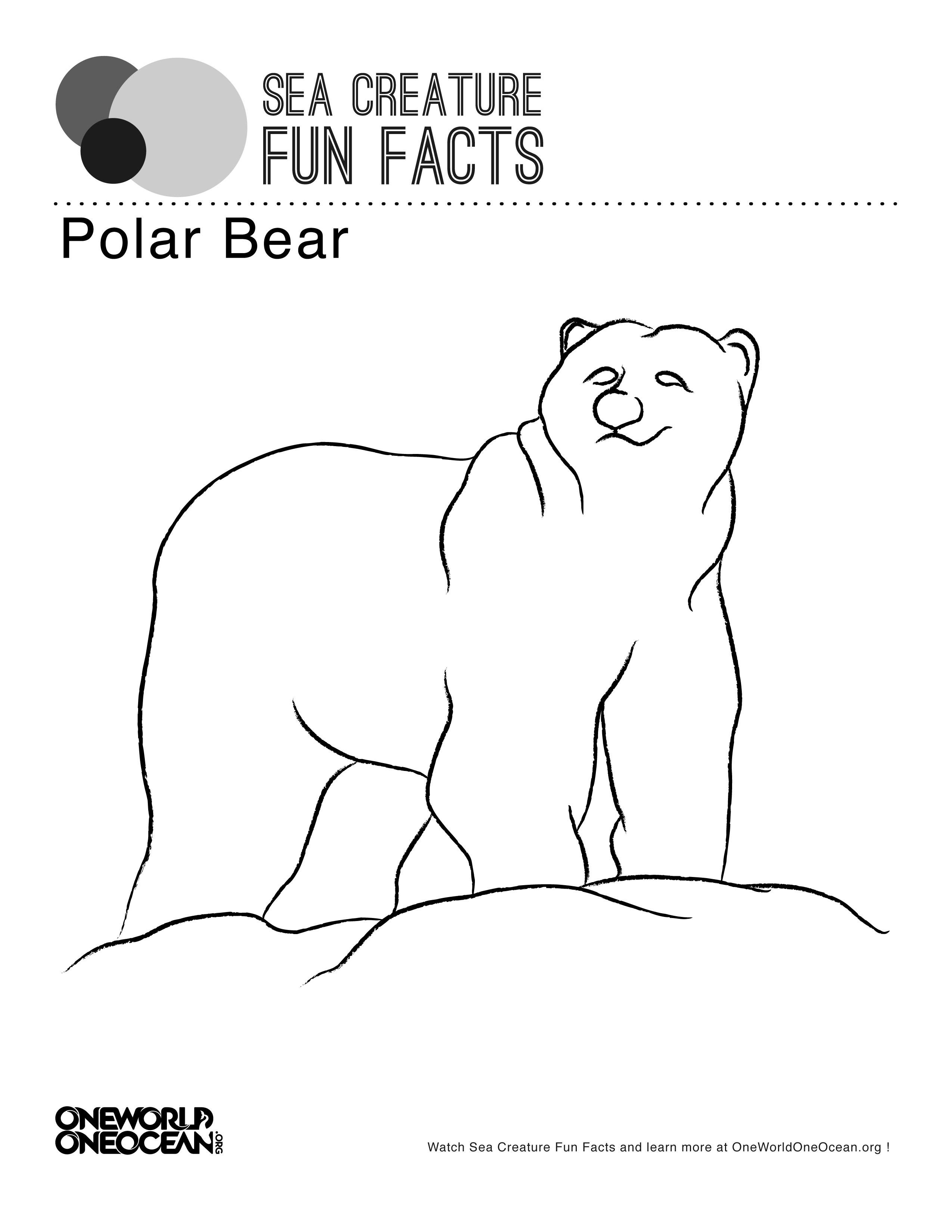Polar Bear Color Page
