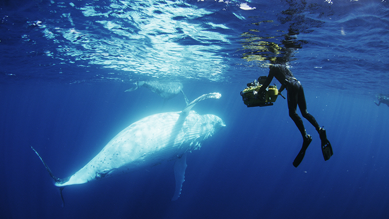 Whale_Try_Smaller.jpg