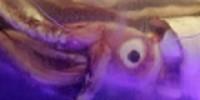 blue-zoo-giant-squid-th.jpg