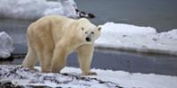 despite-new-report-polar-bears-still-threatened-th.jpg
