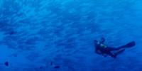 photo-of-the-week-planet-ocean-th.jpg