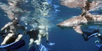 playing-tag-with-sharks-th.jpg