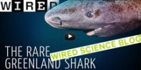 the-school-greenland-sharks-th.jpg