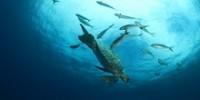 world-oceans-day-playlist-th.jpg