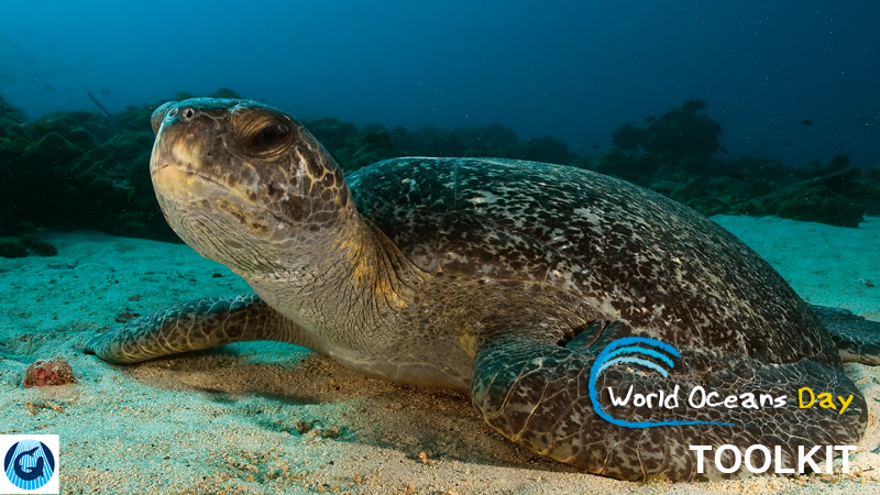 OWOOThumbs_Pages-WorldOceansDayToolkit.png